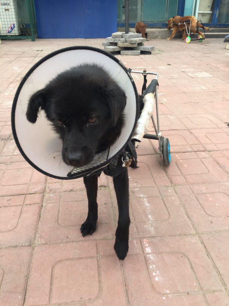 xiaohei - crippled
