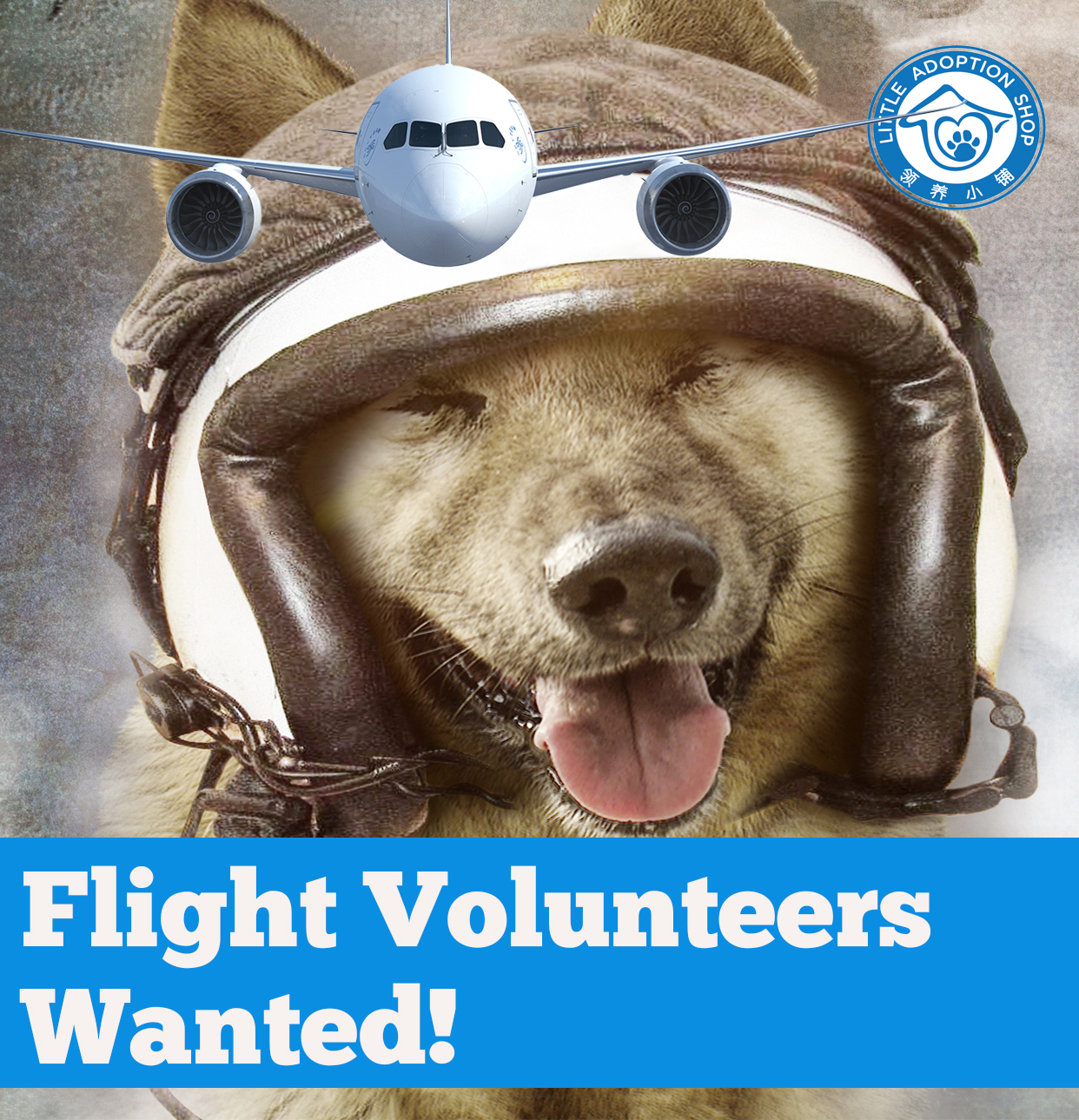 flight volunteers wanted