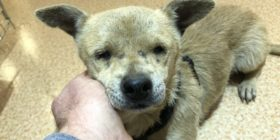 Jenny – Blind, Abandoned Dog – Safe Now