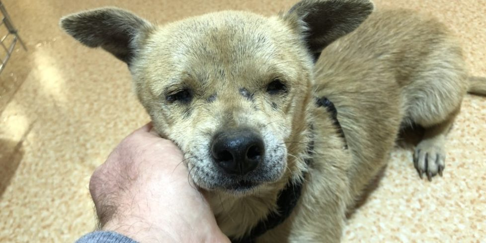 Jenny - Blind, Abandoned Dog - Safe Now