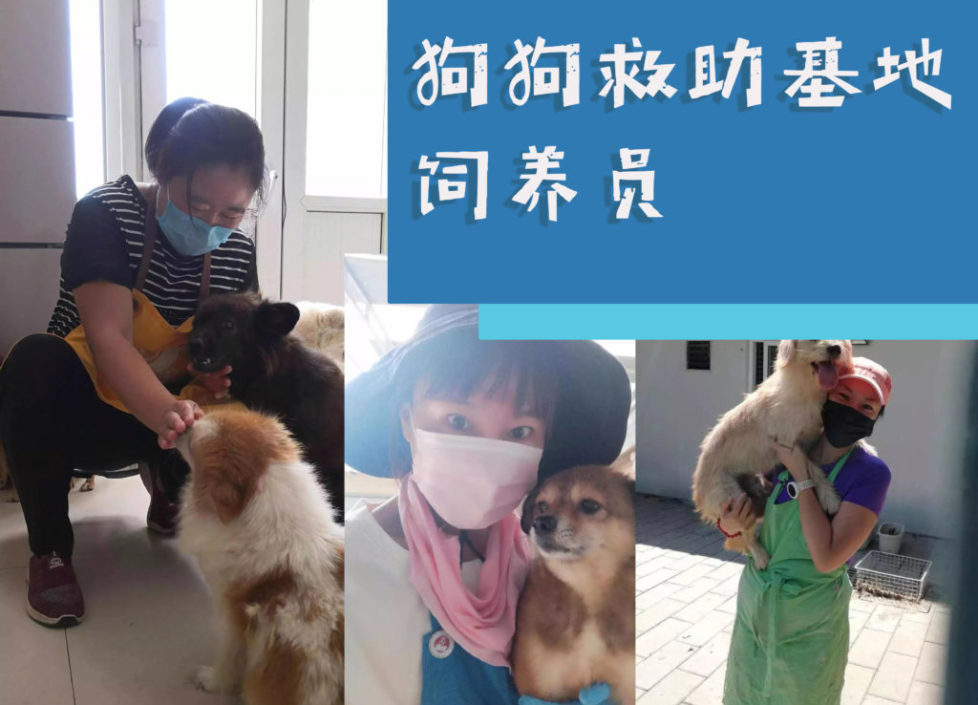 zhaopin-dog-shelter